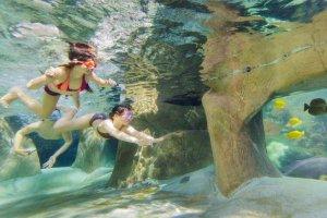 Vakantiepark Center Parcs De Vossemeren duiken