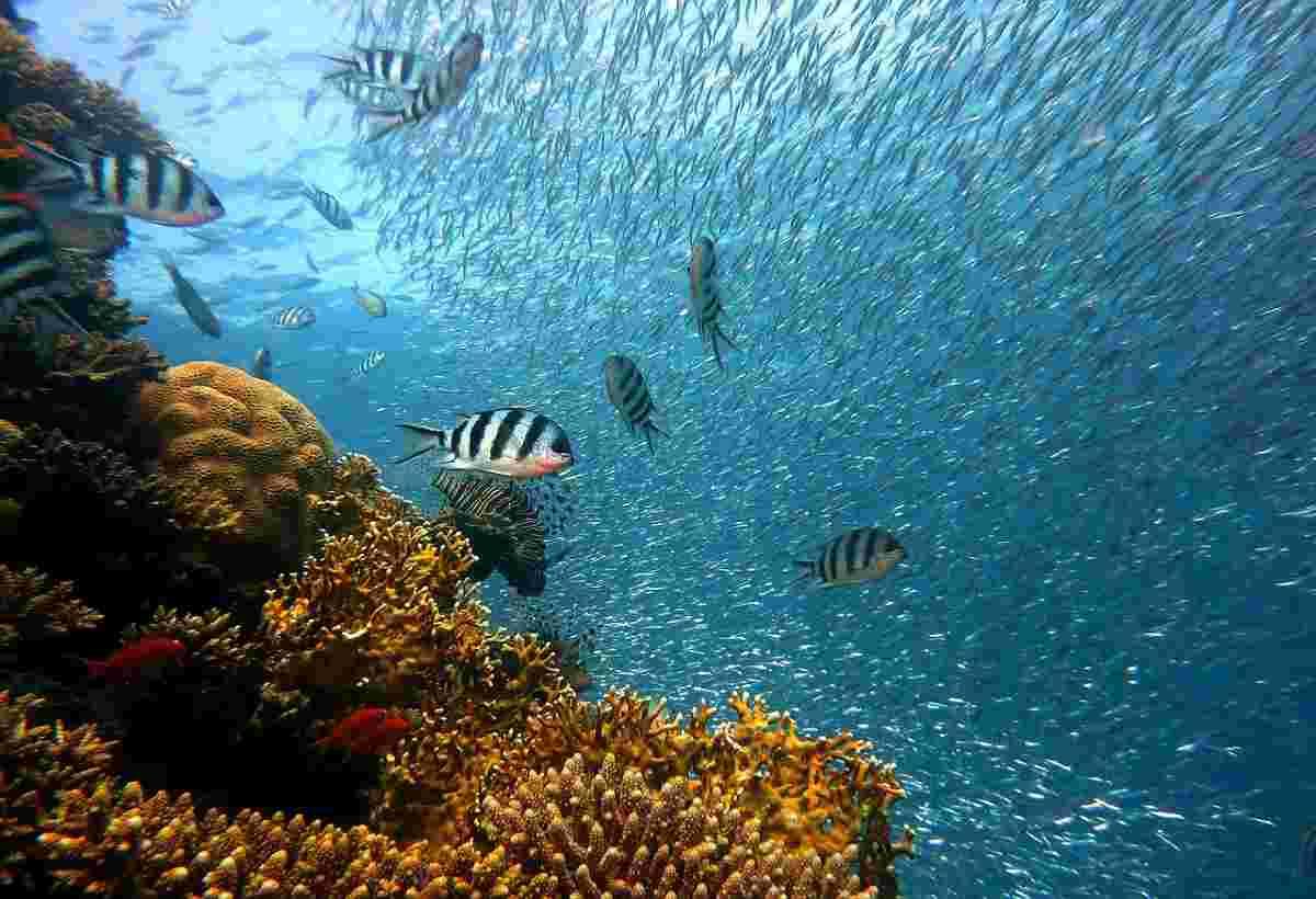 snorkelplekken van Egypte