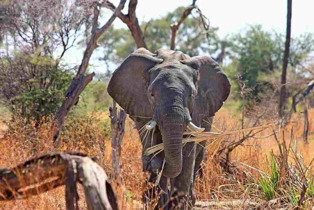 Big Five spotten? 8x de beste Afrikaanse safariparken